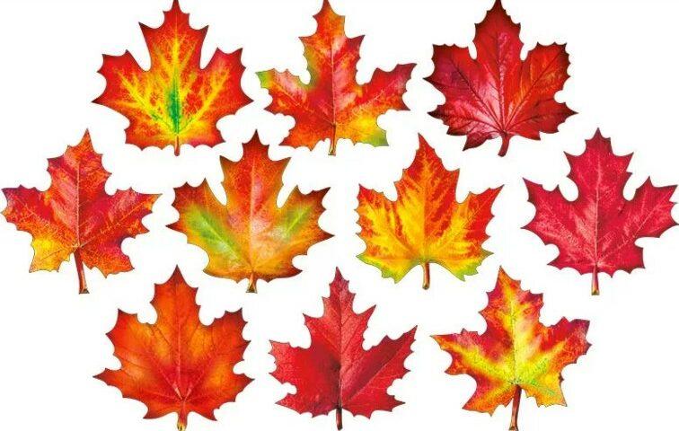 картинки осенних листьев для вырезания цветные идеально подходит практически